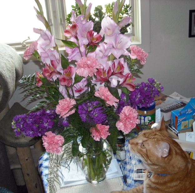 Louie climbed on the kitchen table to check out this bouquet. Bad kitty!