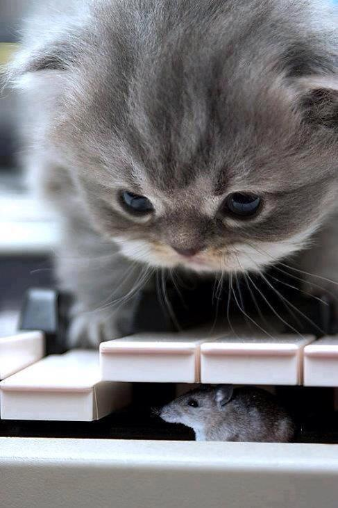 Yeah, I like the kitty pictures. This one comes from Classical Music Humor.