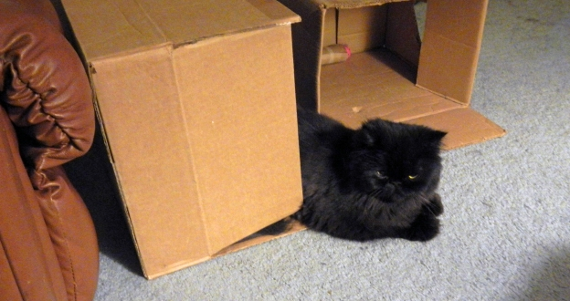 Andy's on guard duty at his new box. Dougy probbably will walk by and need to be reminded of Andy's ownership.