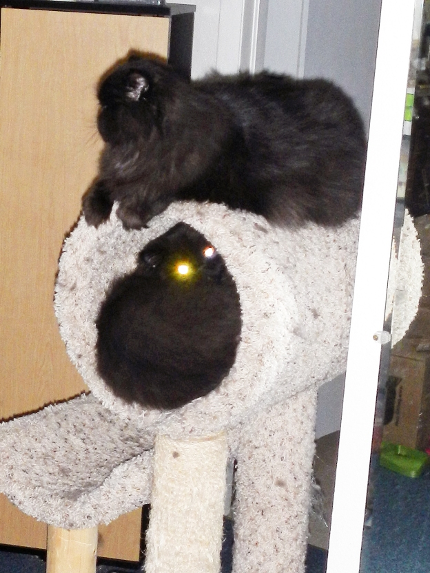 ...don't look in the devil-cat's eyes!