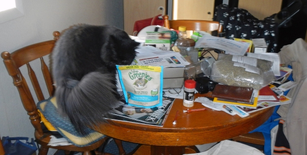 Besides, he'd rather climb on the table because he knows that's where the kitty treats are.