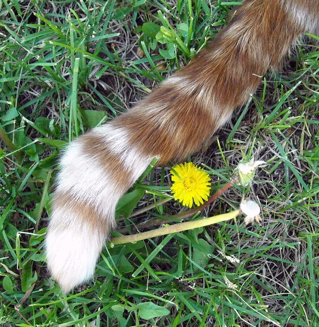 My favorite photo of Louie's tail.