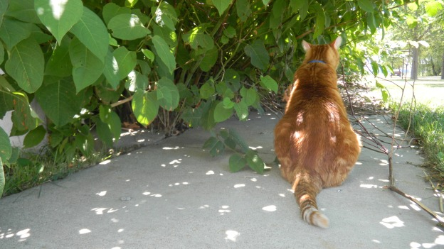 Louie loved hunting insects in this black bamboo thicket.