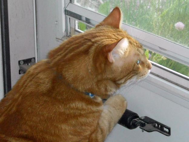 Louie was a good ol' cat!