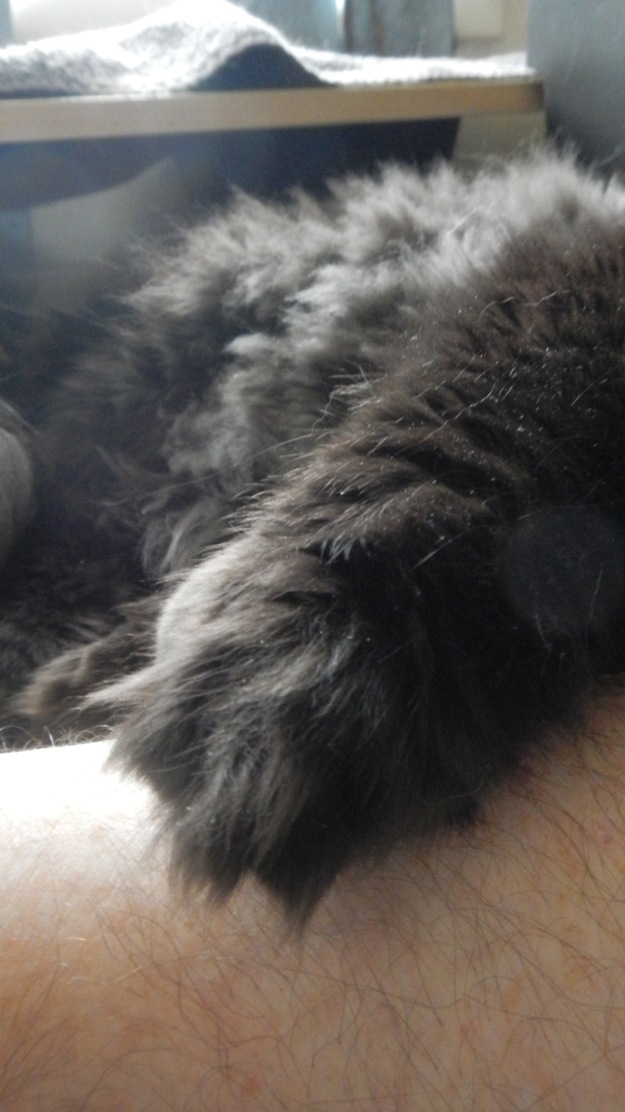 ...then rolled over and put his paw on my arm, the way he always does.