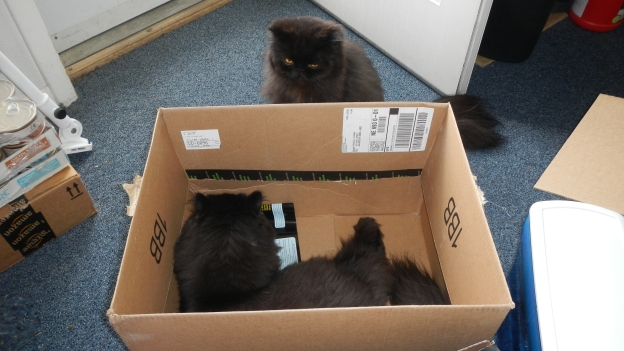 Andy confronts Dougy. This box isn't big enough for two! And Andy wants it.