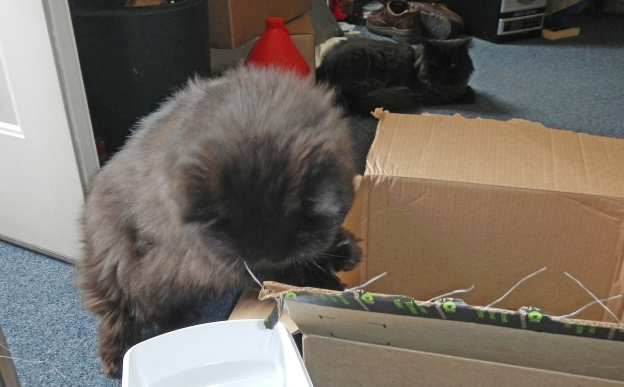 Under the watchful eye of Dougy, Andy makes a decision to check out the smaller box. It's a better choice for a cat anyway: Tight is best!