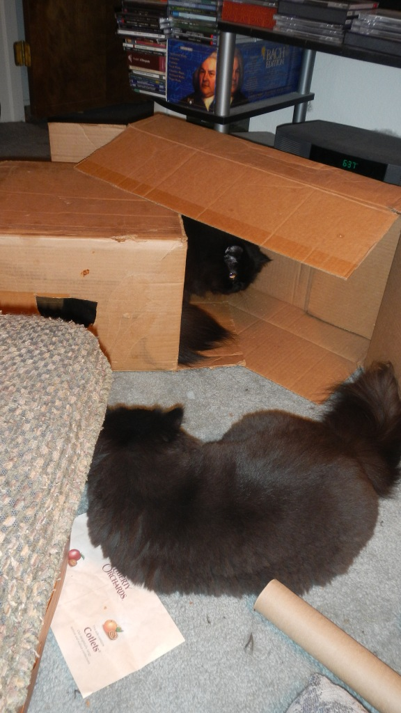 Dougy holds out hope of recovering his prized box.... Andy holds steady. It's his fort now! Mwahahahaha!