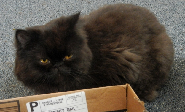 """It, whatever """"it"""" is, came in that black plastic bag. Andy watches the bag. You never know...!"""