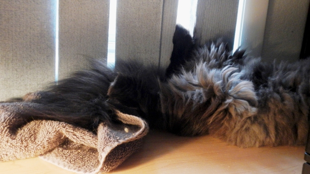 On his back, propped up against the blinds, Andy sleeps.