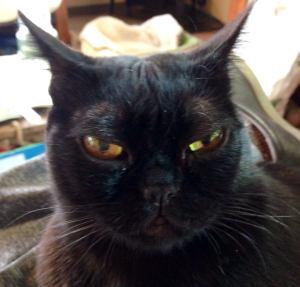 deborah's cats 1
