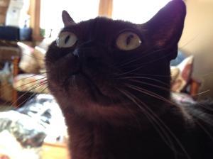 deborah's cats 2