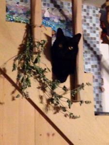 deborah's cats 3
