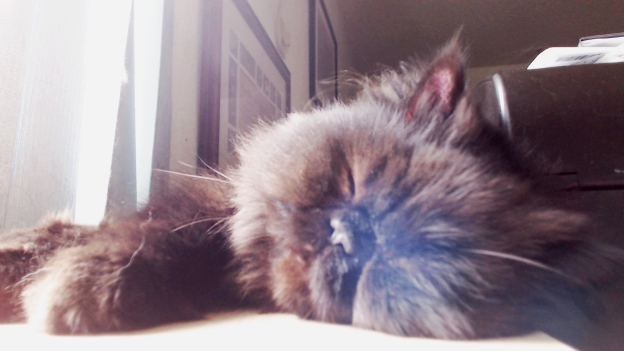 ...but it's pretty exhausting for this little kitty.