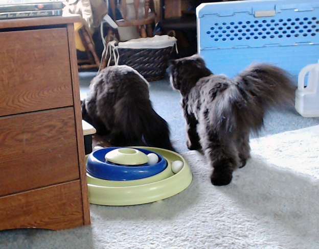 Hydated, Dougy's ready to bump Andy off the kitty food.