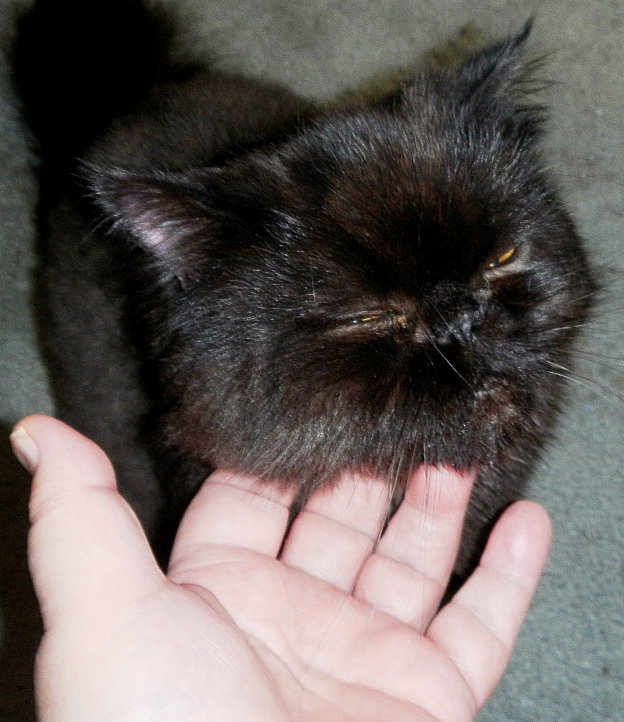 Andy's the same way, but he does like me to scritch his chin and ears...from afar!