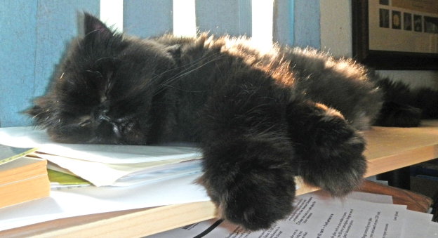 So much for paper. Andy enjoys a snooze in the sun! Woohoo!