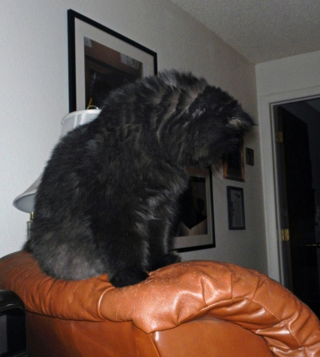 Dougy checked out the living room from his recliner look out, then continued his kitty patrol. Andy and I are safe from the boogeyman tonight! Dougy's on duty!
