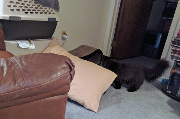 """Dougy likes to """"hide"""" by the doorway till Andy tries to slip into the livingroom...."""