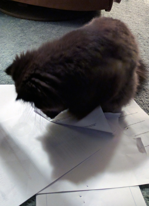 10216 andy ripping up paper.jpg