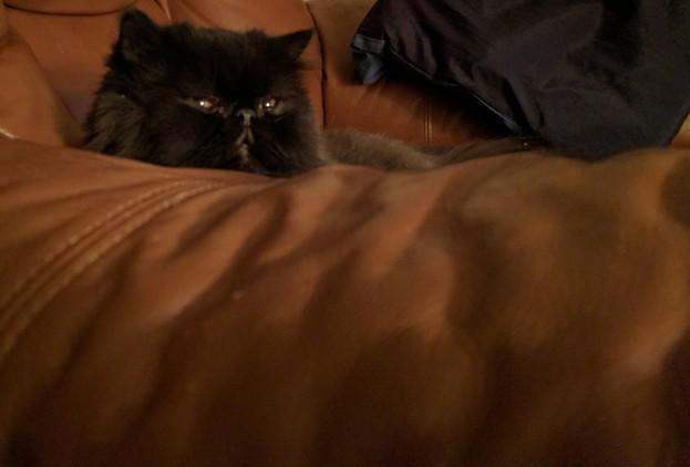 He's a bit perturbed!