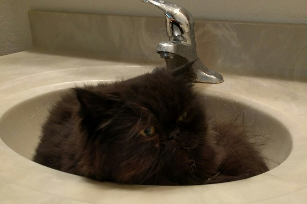 """I woke him up in his sink nest, so I """"scritched"""" his ears and rubbed that yummy spot in between his eyes!"""