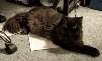 """""""I'm a kitty. No need for this silliness, but the paper is just right for a rest!"""""""