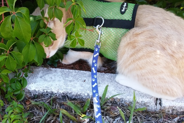 cat Frankie smelling plant