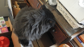 dougy examines drawer