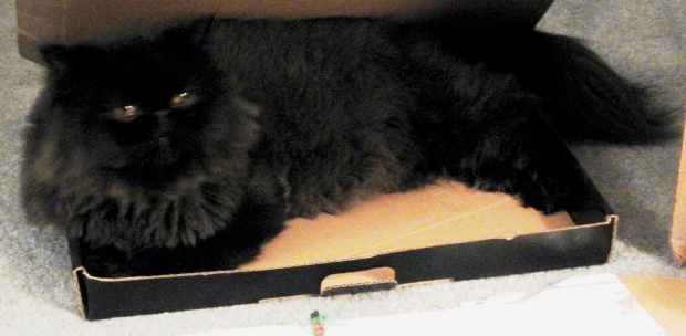 dougy in box 3