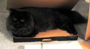 dougy in box 7